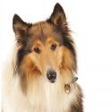 Belcando Finest Grain Free croquette pour chien