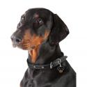 Belcando Finest Light croquette pour chien