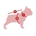 Royal canin race Yorkshire croquette pour chien