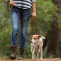 Maxima croquette pour chien Hypoallergenic grain free poisson