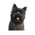 Hills Prescription diet Canine w/d Mini croquette pour chien