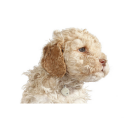 Croquette pour chiens Dingo Adult&Daily