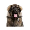 Taste of the Wild Puppy High Prairie croquette pour chiens