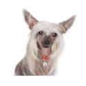 Taste of the Wild Sierra Mountain croquette pour chiens