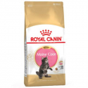Royal Canin-Chaton Maine Coon (1)